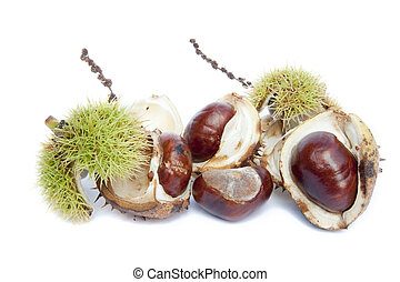Excellent macro conker horse chestnut isolated on white...