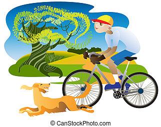 Irish Setter and cyclist - Irish Setter runs alongside a...