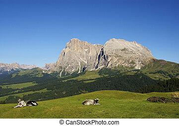 SASSO PIATTO - A GREAT VIEW OF ITALIAN ALPS