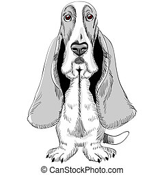 vector dog Basset Hound breed