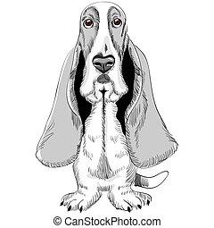 vector dog Basset Hound breed - sketch of the dog Basset...