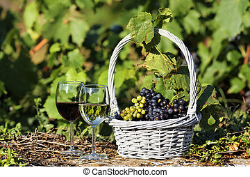 wine and grapes - two glasses of wine and grappes in a field