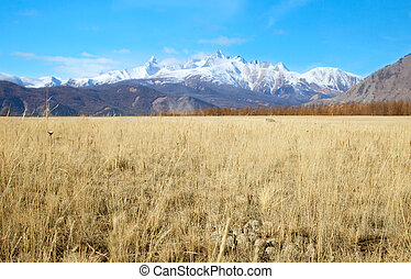 Alpine steppe in the background of snowy mountains