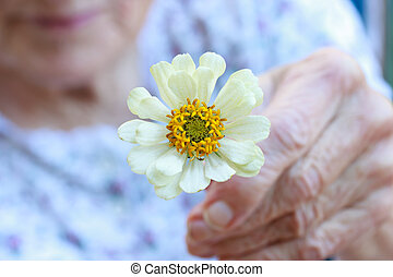 Senior lady holding white zinnia flower