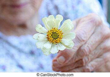 Senior lady holding white zinnia