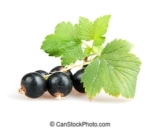 blackcurrant isoalted on white