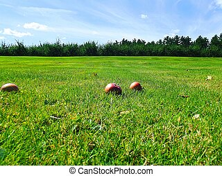 Apples on Field 1 - Close up of apples on a field on a...