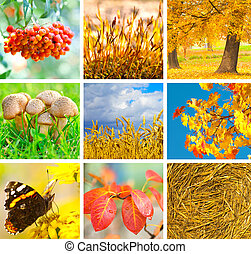 Autumn collage showing different autumn pictures