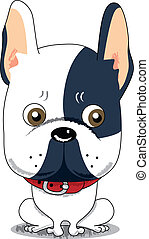Cute French Bulldog - Little cute worried French Bulldog...