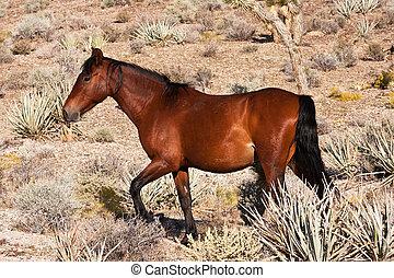 荒野,  Mojave, 馬, 沙漠