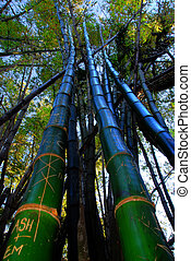 large bamboo trees - skyward bamboo trees with carvings