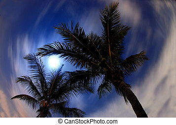 Night palms against a blue sky