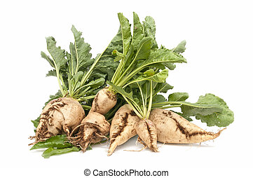 sugar beet - freshly harvested sugar beet on white...