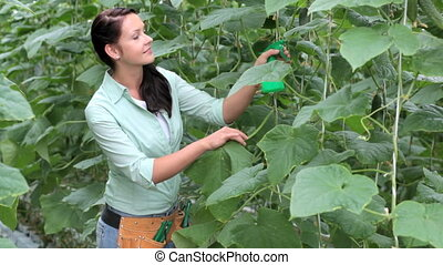 Working in garden - Young woman watering plants in...
