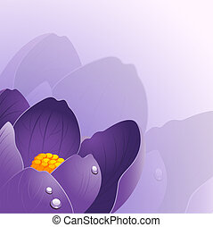 Background with crocus flower. JPEG