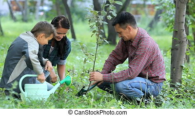 New tree - Family of three planting a new tree in park