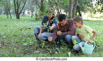 Planting of young tree - Family of three planting a new...