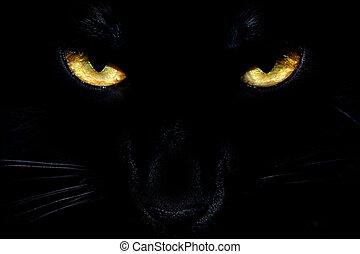 svart, katt, Ögon