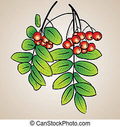 Rowanberry - Rowan on the brown background
