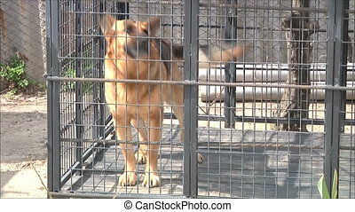 dog barks in the aviary