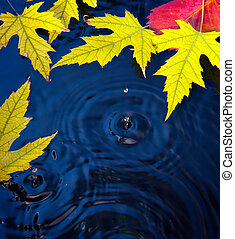 abstract autumn background with leaves - Beautiful autumn...