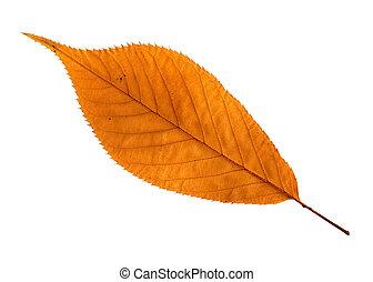 Orange leaf - Close up of a single orange / brown dry leaf...