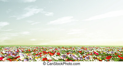 Spring scenery with primroses