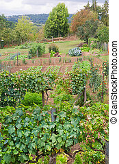 Vegetable garden in the French Charente at Montbron