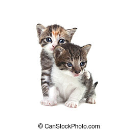 Cute Newborn Baby Kittens Easily Isolated on White -...