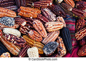 Peruvian Corn - Several traditional varieties of corn in a...
