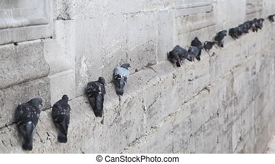 Pigeons on the wall - Yeni Cami Mosque , Istanbul