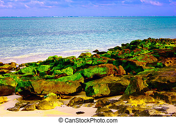 green algae on rock by the sea - rock covered by green algae...