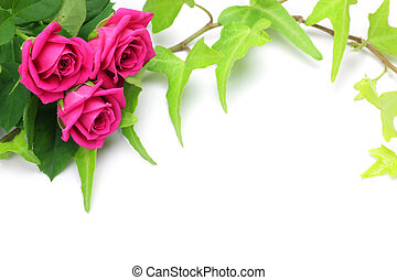 rose and ivy - I took in combination pink rose and ivy in a...