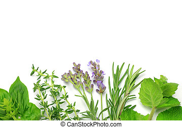 herb - I display various herb and I took it in a white...