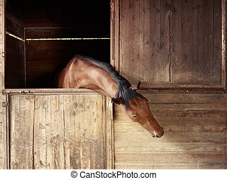 Riding school: horse looking out of stable - english...