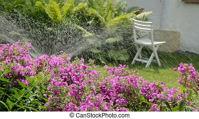 watering flowers in the yard