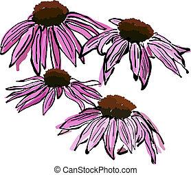 Sketchy Echinacea flowers - Pink Sketchy Echinacea flowers....
