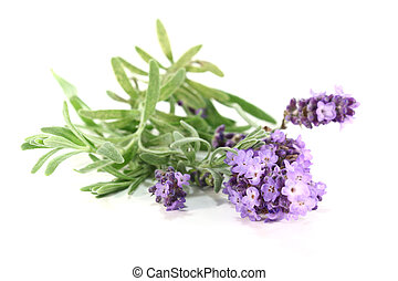 Lavender flowers - few branches with lavender flowers on a...