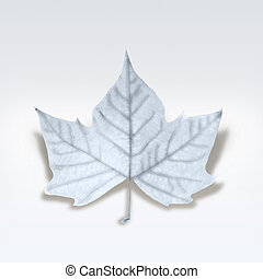 Decorative winter leaf with white texture isolated. Clipping path included so you can easily cut it out and place over the top of a design.