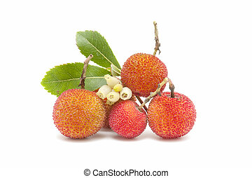 arbutus - Friut of arbutus on white background