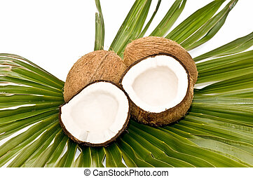 coconuts - still life with fresh coconuts on white...