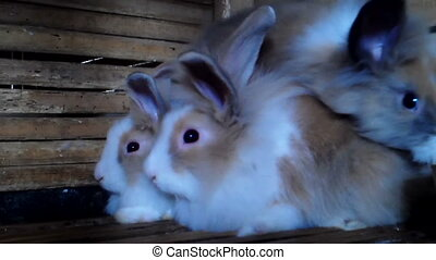 Rabbits are in their hutch video high definition.