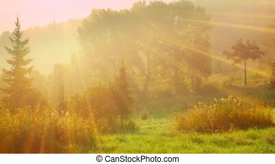 nature summer morning sunny scene - nature summer morning...