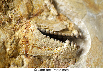 Fossil Teeth - Detail of the fossil of a fish: rather creepy...