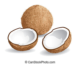 Coconut - Realistic vector illustration of a coconut and...