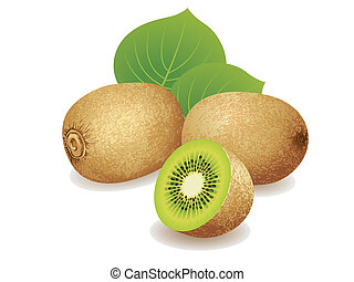 Kiwi Fruit - Realistic vector illustration of a bunch of...