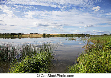 Landscape at the lake - Summer landscape at the lake and...