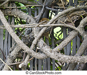 detail of intertwined branches - a detail of intertwined...