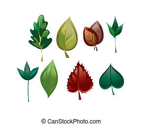 image of different leaves of different trees