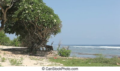 Tropical ocean - A beautiful tree and ocean on background